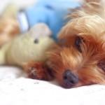 Teodorico um cãozinho charmoso (Vinte e poucos)