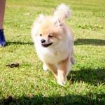 Kelvin, o cãozinho brincalhão (Taciele Alcolea)