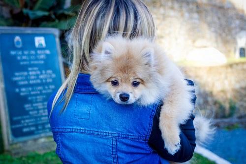cachorro dog