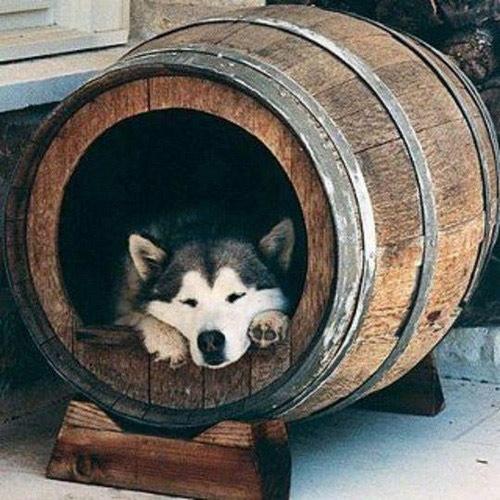 cantinho para pets na decoração da casa - barril