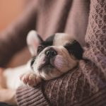 Adotando um pet: Principais pontos pra se atentar com a chegada do novo amigo